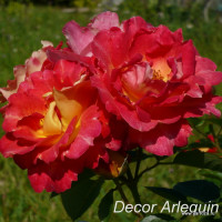Decor Arlequin (1986)